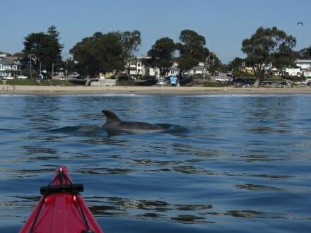 monterey bay wildlife tour