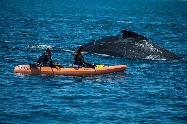 ocean rental santa cruz double kayak