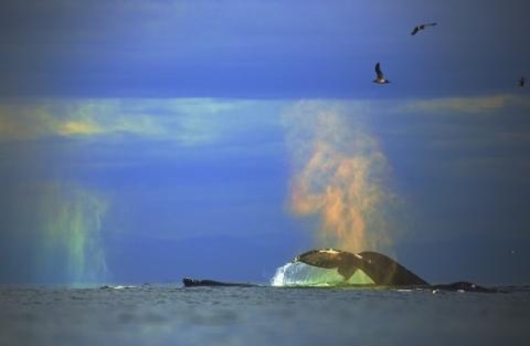 whale watching tour moss landing